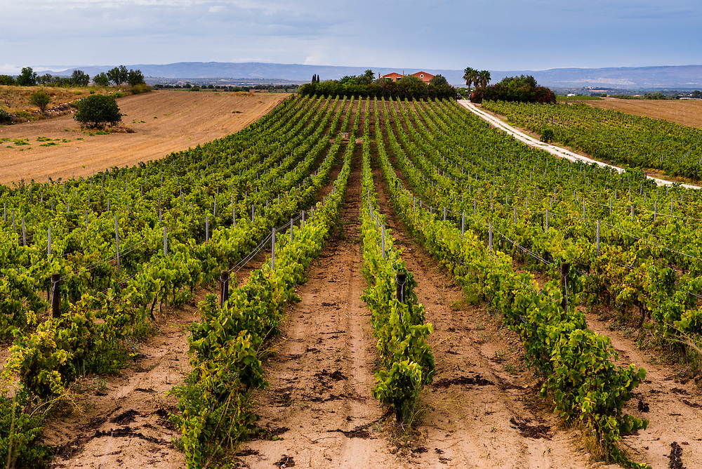 Noto, vineyard and a farm house at a winery in South East Sicily, Italy, Europe